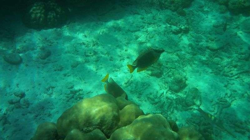 Surin Island 23
